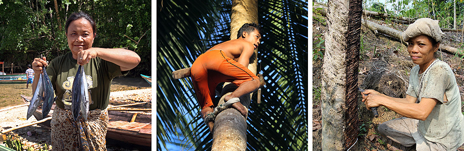 Most people on Nias make their living from rubber, coconuts or fishing.