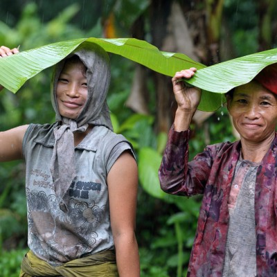 Nias umbrella; rubber tappers using banana leaves as rain cover. Sawo sub-district, North Nias Regency.
