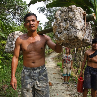 Once a week this man carries his weekly harvest of rubber (around 30 kilos) from his village to the nearest road, 8 kilometers away. Alasa sub-disctrict, North Nias.