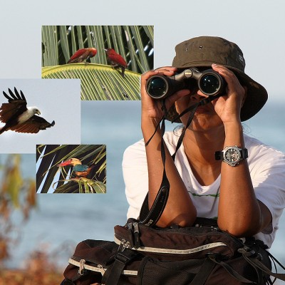 Bird-watching near Tureloto, North Nias Regency (Nias Utara). Many different species can be seen on Nias Island.